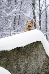 view from the top (mimusha) Tags: trip trees winter rescue dog snow nature foxy mutt outdoor malafatra