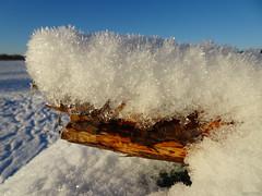 Fluffy Snow Crystals (melting on branch!) (crush777roxx) Tags: park winter snow tree crystals december branch sweden stockholm sony fluffy scene melt sverige crush djurgarden gärdet snowmelting icecrystals 28th djurgården gardet meltingsnow 2015 crystalize sooc straightoutofcamera fluffysnow 20151228 hx90v sonyhx90v crush777roxx