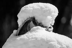Forget where I was standing (OR_U) Tags: winter blackandwhite bw snow germany blackwhite bokeh gargoyle oru schwarzweiss lowersaxony 2016 helmstedt