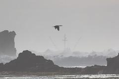 IMG_7417 (armadil) Tags: beach waves surfer wave beaches surfers mavericks bigwaves californiabeaches