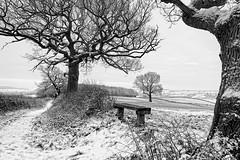 A Winter's View..... (klythawk) Tags: nottingham trees winter white snow black cold bench landscape grey mono sony hedge fields pathway calverton 2470mm dorkethead klythawk a7ll