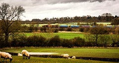 The rainy season (Peter Leigh50) Tags: wet river sheep leicestershire shed rail swollen dbs sence wistow ews 66034