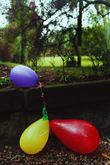 Balloons (TheJennire) Tags: birthday camera flowers trees light red party naturaleza green luz nature yellow canon balloons cores photography photo colours foto purple natureza young poetic colores teen indie fotografia camara tumblr