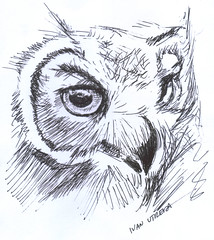 buho a lapicero (ivanutrera) Tags: bird animal pen sketch drawing ave owl pajaro draw dibujo ilustracion lapicero buho boligrafo dibujoalapicero dibujoenboligrafo