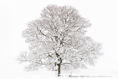 Purity (chrissmithphotos1) Tags: park christmas winter white snow cold tree ice nature beautiful season landscape outdoors frozen frost december branch north january scenic nobody february climate tranquil whitr forast