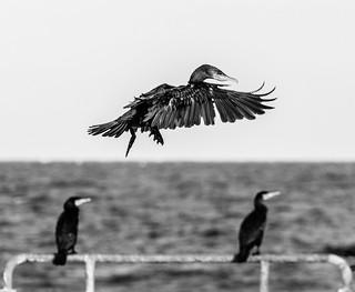 Fly Away