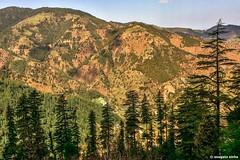 Janjehli valley (Sougata2013) Tags: india mountain nature landscape hill valley mandi himachalpradesh janjehli shikaridevi nikond7200 janjehlivalley shikaridevitemple