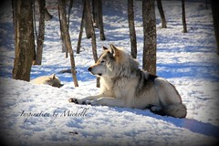 2016-16 (Inspiration By Michelle) Tags: canada animals quebec omega parc parcomega
