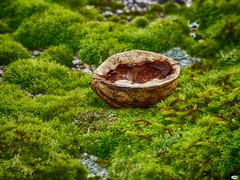 Barco de secano (juantiagues) Tags: musgo verde nuez cscara juanmejuto juantiagues