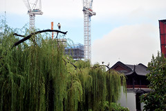 Aus739 - Ibis and Construction Cranes, Chinese Friendship Garden (Donna's View) Tags: skyline nikon sydney australia ibis constructioncranes chinesefriendshipgarden d60