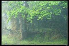 DP1U6632 (c0466art) Tags: light beautiful grass fog creek canon landscape scenery atmosphere mysterious land 1dx c0466art