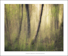 Spring Impressions (shaun.argent) Tags: morning trees tree green texture nature woodland spring woods flora seasons icm shaunargent