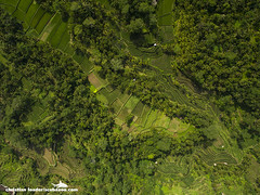 Tegalalang rice terraces - Bali-2016-10 (Christian Loader) Tags: bali field indonesia rice terrace aerial system unesco worldheritagesite agriculture irrigation ubud paddyfield riceterrace drone phantom3 tegalalang aerialimage subak tegallalang scubazoo christianloader tegalalangriceterrace scubazooimages djiphantom3professional