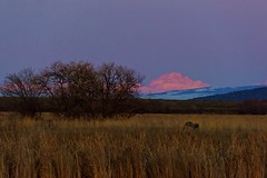 Twilight Glow (Jeff Brough) Tags: sunset twilight sundown dusk idaho swamp marsh wyoming tetons mtmoran jeffbrough