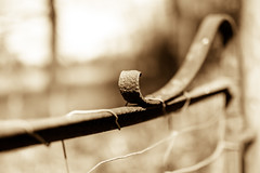 @f1.4 (Eric Goncalves) Tags: sepia rust dof nikond810 sigma50mmf14exart