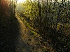 Spring Trail (xjblue) Tags: utah spring wasatch olympus hike trail mtolympus pointnshoot saltlakevalley wasatchmountains stylus1000 bonnevilleshoreline