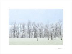 Morning passages (E. Pardo) Tags: trees light luz forest landscape austria licht rboles paisaje bosque landschaft wald bume steiermark gesuse