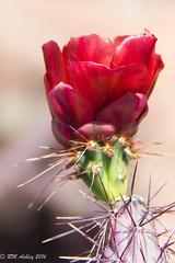 IMG_2937.jpg (ashleyrm) Tags: travel arizona museum sonora desert tucson tucsonarizona