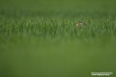 Je te regarde du coin de l'il (Vianney Vaubourg) Tags: nature by nikon photographie bokeh 400 tc fl mm nikkor lorraine f28 couleur vr lapin vosges il bl 2016 tc14eii vianney livre animalier 400f28 d3s vaubourg naturebynikon