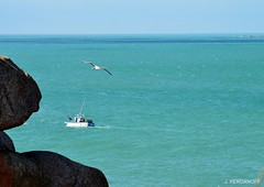 Le bateau de pche et l'oiseau (jackline22) Tags: horizon bretagne bleu ciel perros bateau oiseau rocher ctesdarmor