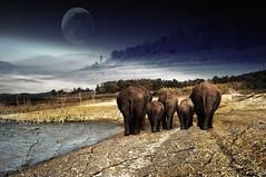 #It's Also Their Earth.... (graceindirain) Tags: africa ivory elephants extinction poachers magicunicornverybest graceindirain