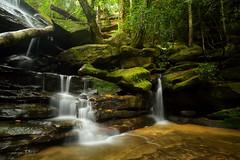 Lower Somersby Falls (Paul Hollins) Tags: waterfall rainforest australia newsouthwales somersby somersbyfalls nikon1635mmf4 nikond750