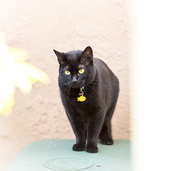 Cat (federicophotography) Tags: nature animal cat mammal photography nikon feline sp di d750 tamron vc 70200 f28 federico usd federicophotography