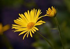 Spring 2016 - 800 LBG (Lostash) Tags: life flowers plants nature spring flora seasons