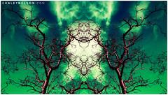 Visions Of Emerald Chaos (kaleynelson) Tags: trees abstract tree nature landscape meditate symmetry mirrored symmetric symmetrical meditation psychedelic spiritual chakra chakras alexgrey sacredgeometry kaleynelson