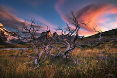 Touches (Jay Daley) Tags: chile patagonia southamerica sunrise nationalpark nikon deadtree torresdelpaine d810 carlzeiss15mm