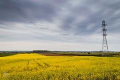 Rape & Poppy (logoervin) Tags: flowers plants nature landscape nikon hungary baja hoyafilter sirui