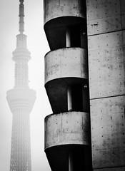 Sky Tree I (Douguerreotype) Tags: city sky urban blackandwhite bw mist tree tower monochrome japan architecture buildings concrete mono tokyo