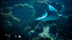 An Hour at the Acquarium (kuntheaprum) Tags: fish seahorse acquarium newengland