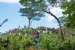 H504_3292 (bandashing) Tags: trees red england people men green manchester shrine branch cut hill crowd logs down foliage chop sylhet bangladesh fell socialdocumentary mazar aoa shahjalal bandashing akhtarowaisahmed treecuttingfestival lallalshahjalal