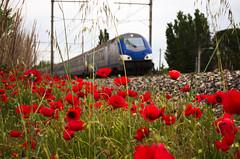Red track (Phil_Heck) Tags: coquelicot train ter rouge fleur voie plante champ paysage flower printemps landscape rail extérieur nikon