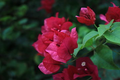 (Azyan Harriott) Tags: flowers plants nature macroshots