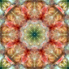 abstract (chrisinplymouth) Tags: art circle symmetry pattern design artwork circular geometric symmetrical geometry digital octagon octagonal square cw69x cw69sym digitalart mandala round overtcircle asd plx kaleidoscope