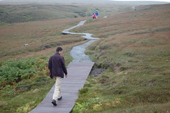026_Unst (monika & manfred) Tags: uk water birds islands scotland naturereserve mm waterfowl moor shetland birdsanctuary shetlands unst bonxie shetlandislands bonxies breedinggrounds