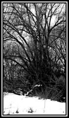 Gathering (Shi Devotion) Tags: flowers blackandwhite selfportrait art halloween nature writing vintage painting photography video eyes poetry artist dolls drawing meme textile paintingwithlight myart deviantart shortstory weaving riddle facebook moonshadow selfie urbex sugarskull youtube diaryentry motivationalposters twitter barrythecat 365selfies creepypasta reactiongif shidevotion dailyselfie selfietherapy markymarkandthefunkybutt adorakitty harleyquinnmouse