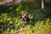 Hapiness in the grass. (christiangildieguez) Tags: dog naturaleza green nature grass happy funny perro felicidad diversión hierba