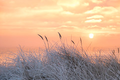 Winter Sunrise (Infomastern) Tags: winter cold vinter frost rime geolocation rimfrost kallt geocity camera:make=canon exif:make=canon skateholm geocountry geostate exif:lens=efs18200mmf3556is exif:aperture=50 exif:focallength=80mm exif:isospeed=250 camera:model=canoneos760d exif:model=canoneos760d