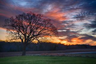 My favorite tree on the Chancellorsville Battlefield