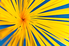Pasta swirl (illus00) Tags: blue colors lines yellow canon 50mm pov pasta explore swirl noodle spaghetti flickrblog catchy 50d 24ccfbt