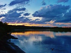 Swimming... (krystyna_piw) Tags: park blue sunset summer dog canada clouds swimming river edmonton alberta bella nwn augut