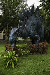 Stegosaurus (Keith Kelly) Tags: statue asia seasia southeastasia dinosaur yangon burma myanmar mm stegosaurus asean mmr 104 rangoon peregrinus keithkelly rooflizard  keithakelly coveredlizard  yangonzoologicalgarden keithalankelly