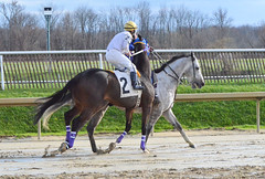 2015-12-31 (32) r4 Jeremy Rose on #2 Escrow Kid (JLeeFleenor) Tags: horses caballo cheval photography md photos uma maryland cal jockey jinete cavallo cavalo pferd equestrian kuda alogo equine hest thoroughbreds soos hevonen cuddy paard cavall kon koin laurelpark  jokey fantino hst ceffyl  jquei  ko faras hestur  perd ngi  konj    capall beygir yarraman dokej rennreiter  pfeerd marylandhorseracing marylandracing   okej kilparatsastaja jocheu