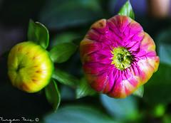 Two Stories! (Furqan Faiz) Tags: new flower nature beautiful beauty lens amazing nikon pretty explore nikkor nikkor1855mm nikonphotography iamnikon instagramapp nikond5300 nikontop