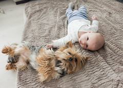 start on a friendship (mrs_fedorchuk) Tags: york family friends boy pet baby love yorkie kid friend child friendship happiness son yorkshireterrier babyboy