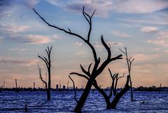 lake mulwala (robertmilesdesign) Tags: landscape australia australianlandscape