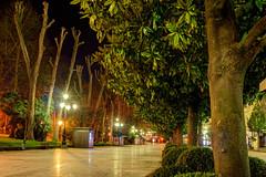 El Paseo de Los lamos, Oviedo (ccc.39) Tags: parque night luces noche calle rboles asturias paseo nocturna oviedo